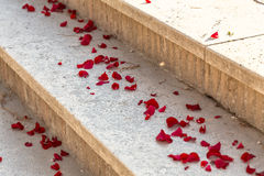 Rose petals on the staircase during wedding Royalty Free Stock Photo
