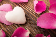 Rose petals. Stock Images