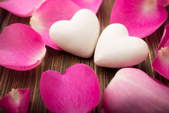 Rose petals. Stock Photos