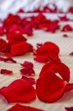 Rose Petals sul letto Fotografia Stock Libera da Diritti