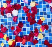 Rose petals on a tile mosaic Stock Photos