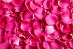 Rose petals, top view. Floral background. stock photography