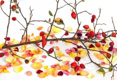 Rose petals and a tree branch on a clean background. stock photos