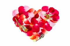 Rose petals Valentine heart shape on white background Royalty Free Stock Photo