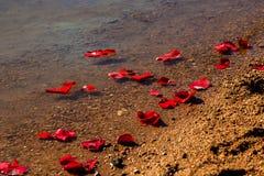 Rose Petals Washing Up On Shore Stock Photo