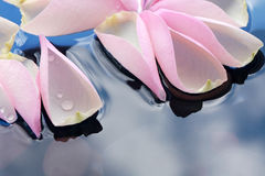 Rose Petals On Water Royalty Free Stock Photo