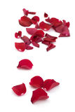 Rose petals on white. Royalty Free Stock Image