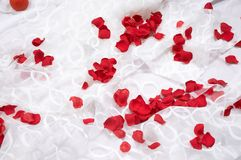 Rose petals on white Royalty Free Stock Image