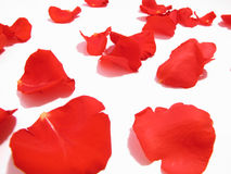 Rose petals on white. Red rose petals on white background royalty free stock photography