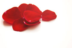Rose petals on white background Stock Images
