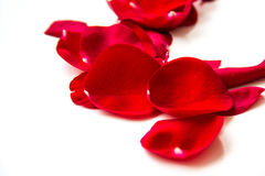 Rose petals on white background Royalty Free Stock Photography