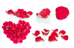 Rose petals  on white Stock Photos