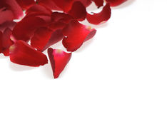 Rose petals on white background Stock Image