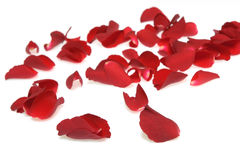 Rose petals on white background. Red rose petals over white, shallow focus stock photo