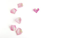 Rose petals on white background. Six oink and blush rose petals on white background Royalty Free Stock Photos