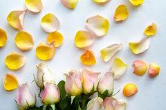 Rose petals on a white fabric Stock Photography