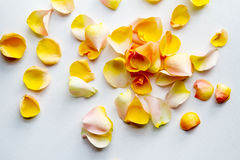 Rose petals on a white fabric Royalty Free Stock Photography