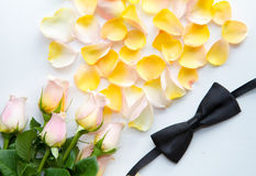 Rose petals on a white fabric Stock Photos