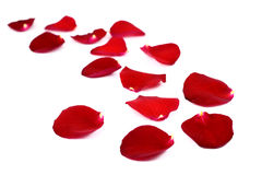 Rose petals on white Stock Photo