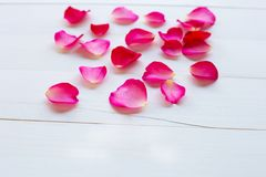 Rose petals on white wooden stock photo