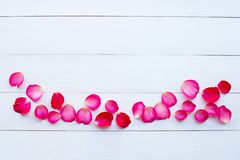 Rose petals on white wooden. Background stock photography