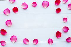 Rose petals on white wooden royalty free stock image