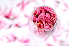Rose petals in a wine glass Stock Photo
