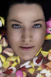 Rose petals and a woman face Royalty Free Stock Image