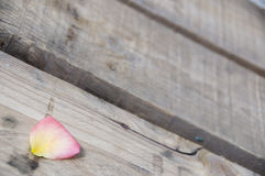 Rose petals on a wood Stock Image