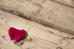 Rose petals on a wood Stock Photography