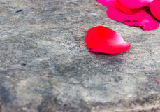 Rose Petals on a wooden Royalty Free Stock Image