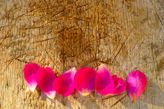 Rose Petals On Wooden Background Stock Images