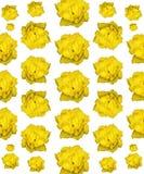 Rose Photo Pattern amarela isolada fotos de stock royalty free