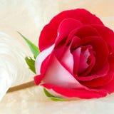 rose piękna Zdjęcia Stock