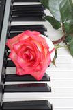 Rose piano Royalty Free Stock Photo