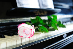 Rose and piano. Beautiful red-and-white rose on the old piano keyboard Royalty Free Stock Photography