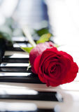Rose and piano Stock Photography