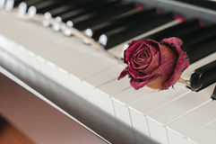 Rose on a piano Royalty Free Stock Photography