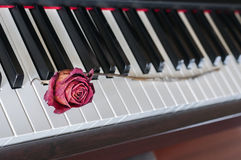 Rose on a piano Stock Photos