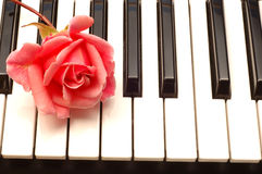 Rose on Piano. Small red rose on Piano keys royalty free stock photography