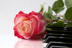 Rose on Piano Stock Images