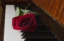 Rose on piano Stock Photo