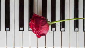 Rose on piano Royalty Free Stock Image