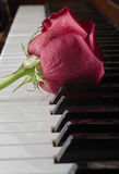 Rose on piano Royalty Free Stock Photos