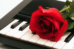 Rose on piano keyboard. A single red rose on black and white piano keys Stock Image