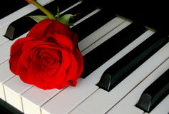 Rose and piano keyboard. Red rose lying on piano keyboard royalty free stock photos