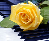 The rose on the piano keyboard stock photo