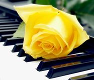 The rose on the piano keyboard Royalty Free Stock Image