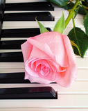 Rose on piano keys Stock Images