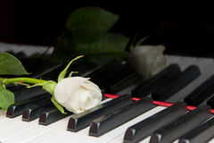 Rose on Piano keys Royalty Free Stock Photo